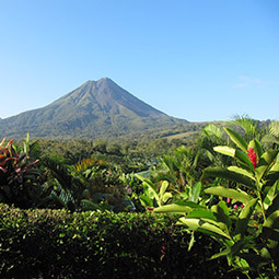 a mountain with tropical plants