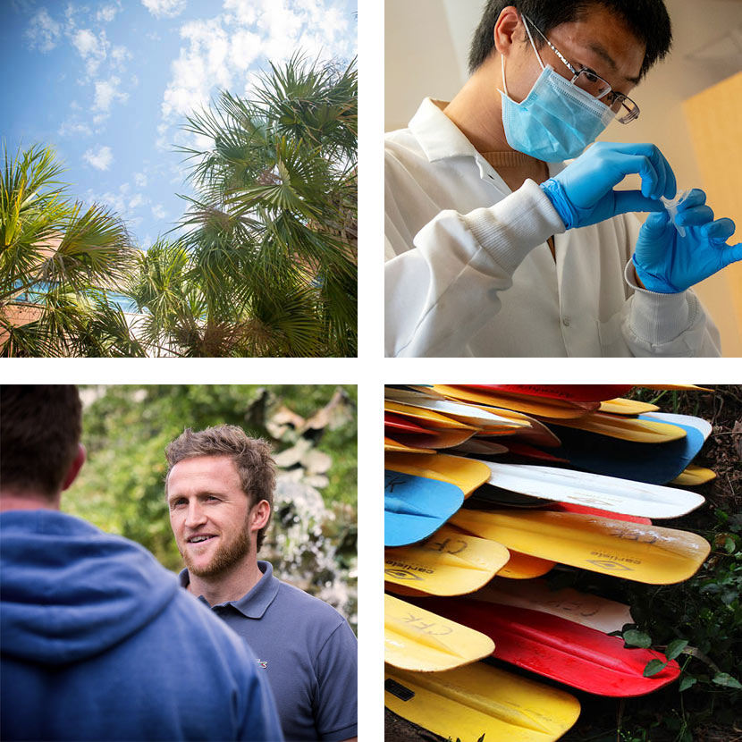 a photo of palmetto trees, students walking, colorful canoe paddles and students dancing