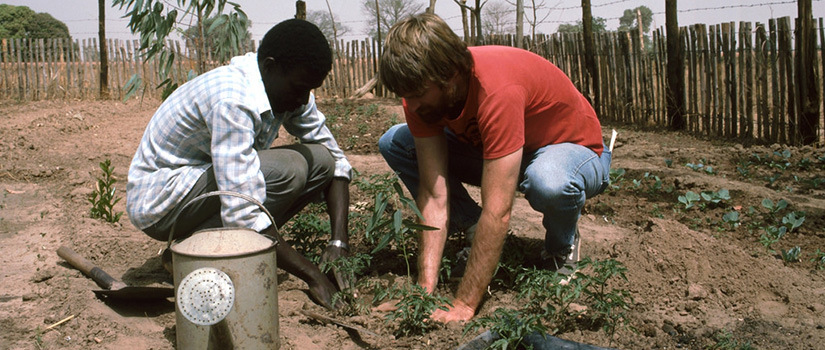 A volunteer planting together with a local man in the Gambia. (Courtesy of the Peace Corp)