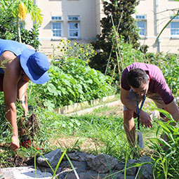 A few individuals working in the community garden