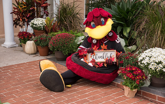 Cocky mascot sitting among fall flowers with sign that says Thankful
