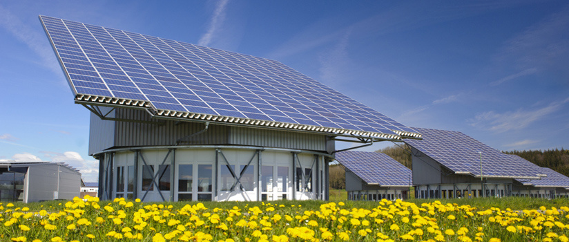 Solar panels in a field of yellow flowers