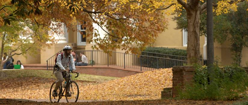 Man bicycling beneath tree with yellow leaves on Horseshoe