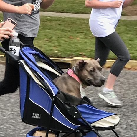 The organization even gave out prizes for dogs!
