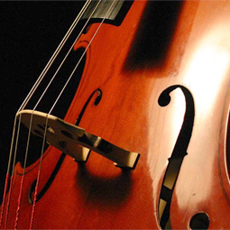 Cello Closeup