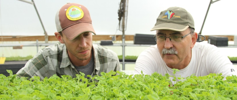 CENR researchers examining plants