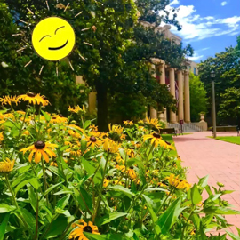 Sunny days at McKissick Museum