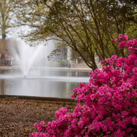 Springtime at Thomas Cooper Library