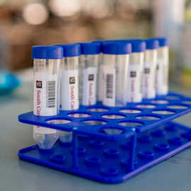 Several empty test tubes used for the Salivir Test lined up in a tray. They have the UofSC logo and barcodes on them.