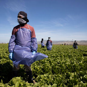 farm worker in a field wearing a mask and apron