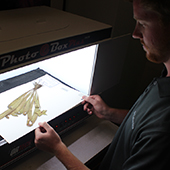 Student digitizing herbarium data