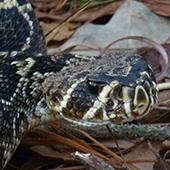 Snake-charmed